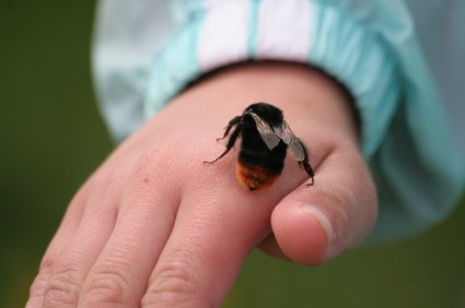 bee on small childs hand