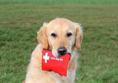 golden retriever carrying a first aid kit